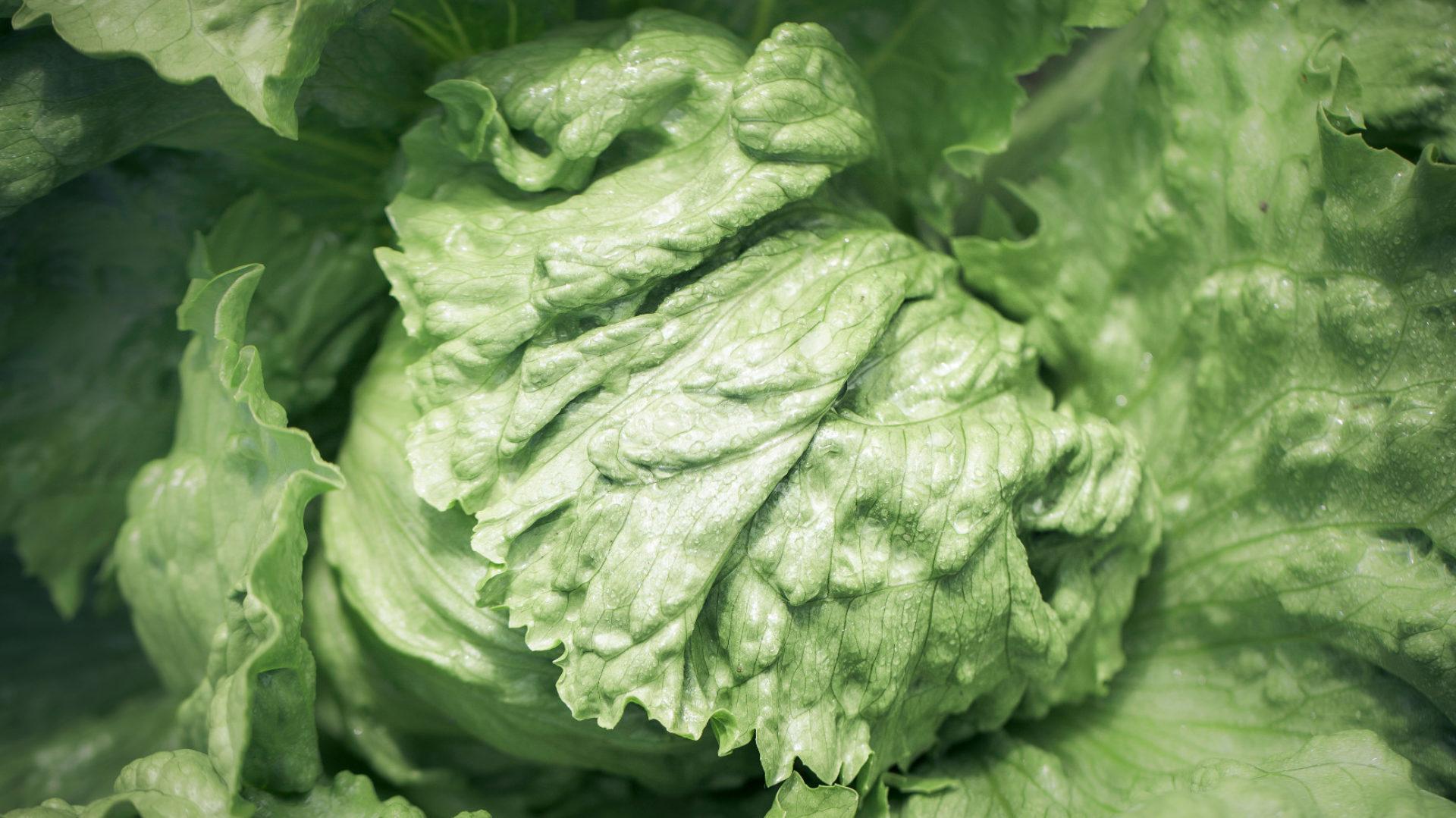 Bjud Grönsaker